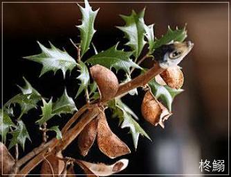 節分の習わしや歳の数だけ豆を食べる理由 & 人気のお寺ランキング!setu1