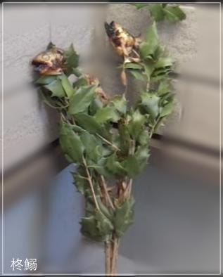 節分の習わしや歳の数だけ豆を食べる理由 & 人気のお寺ランキング!setu2