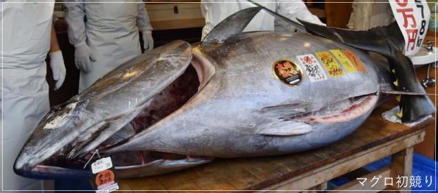すしざんまいの初競り2019の値段3億3千万!なぜ?大間の漁師の収入はmag1