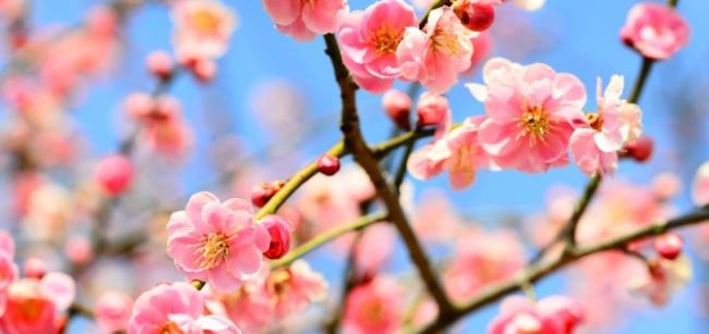 新元号「令和」出典は万葉集の梅の花の歌「初春の令月...」!意味と内容は