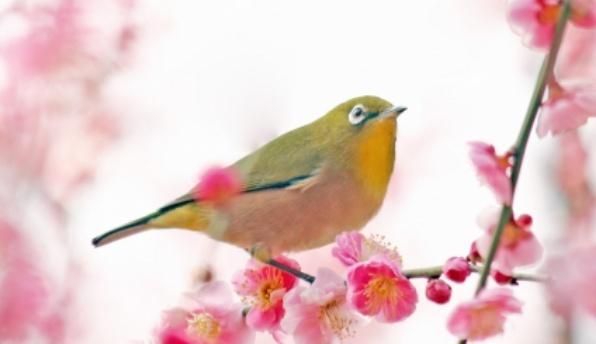 万葉集と梅の花の歌「初春の令月...」 はどんなもの?意味や内容は?